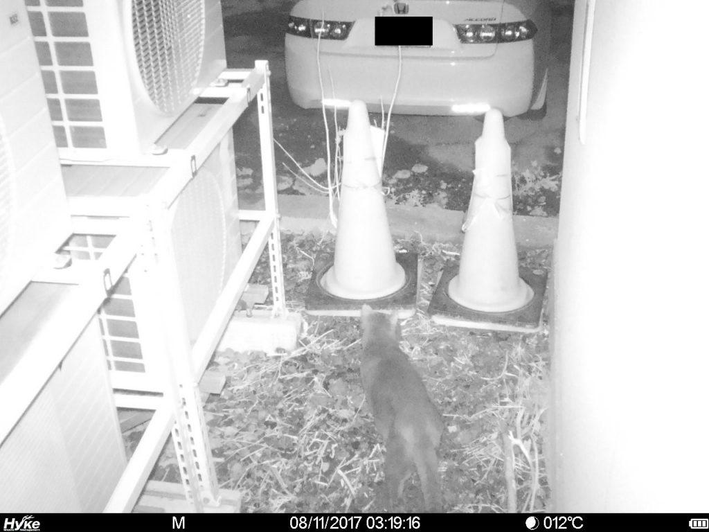 hyke SP4G 夜間 猫1