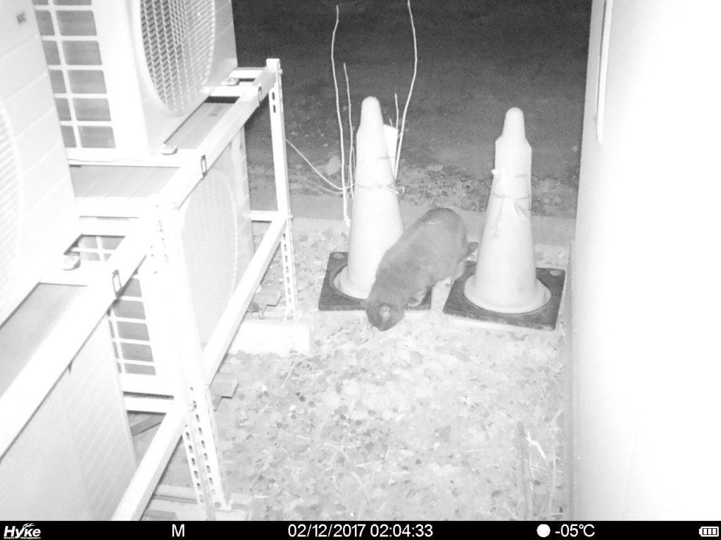 hyke SP4G 夜間 猫2